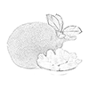 Shop - Jackfruit Products
